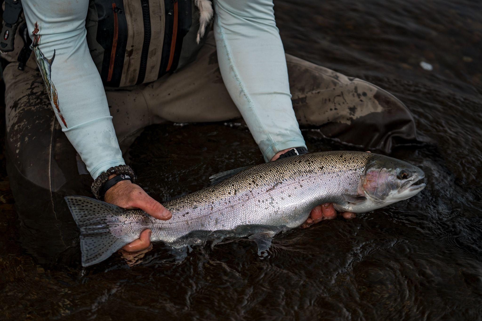 rainbow trout in alaskan rivers