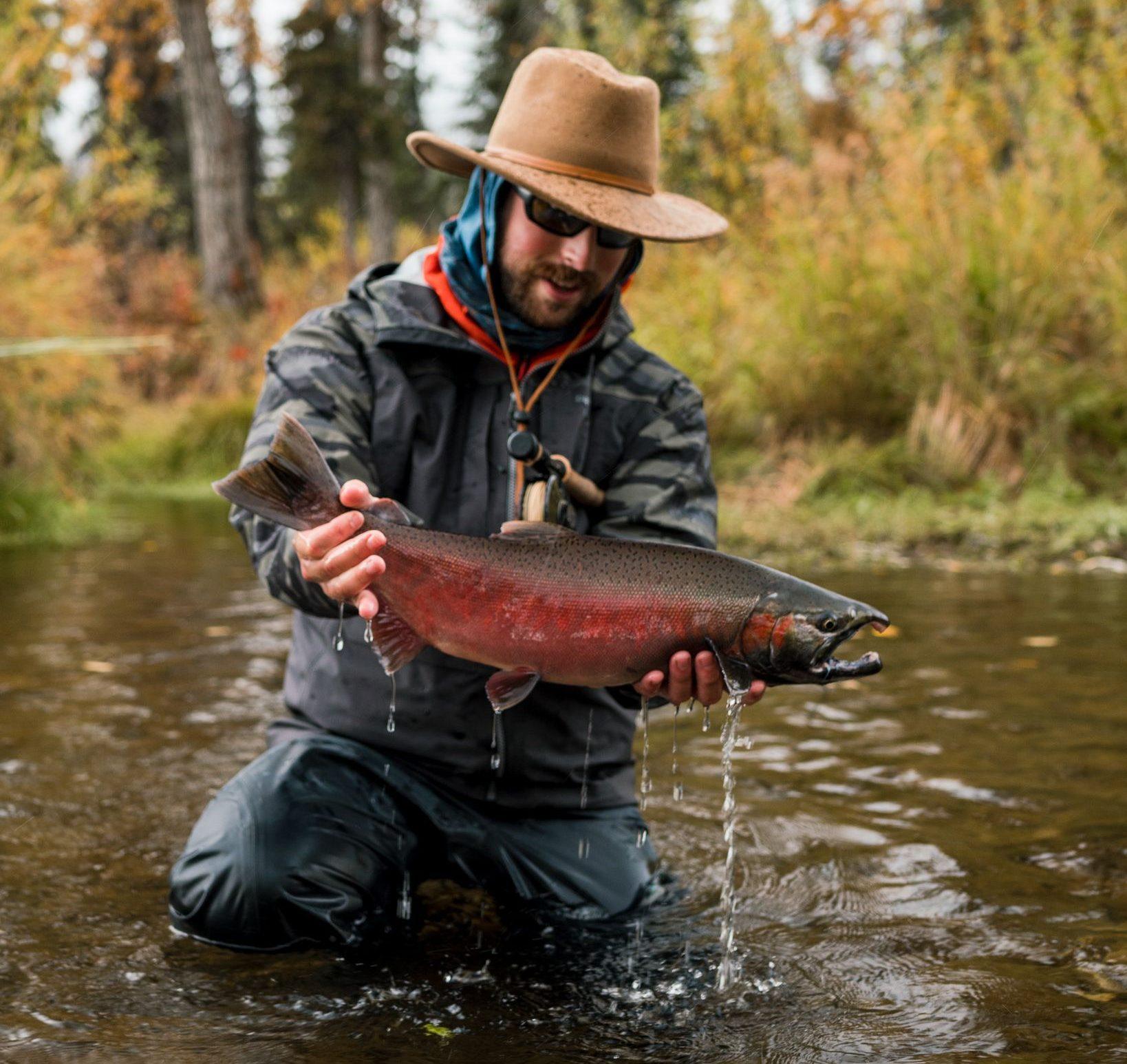 coho salmon in alskan rivers