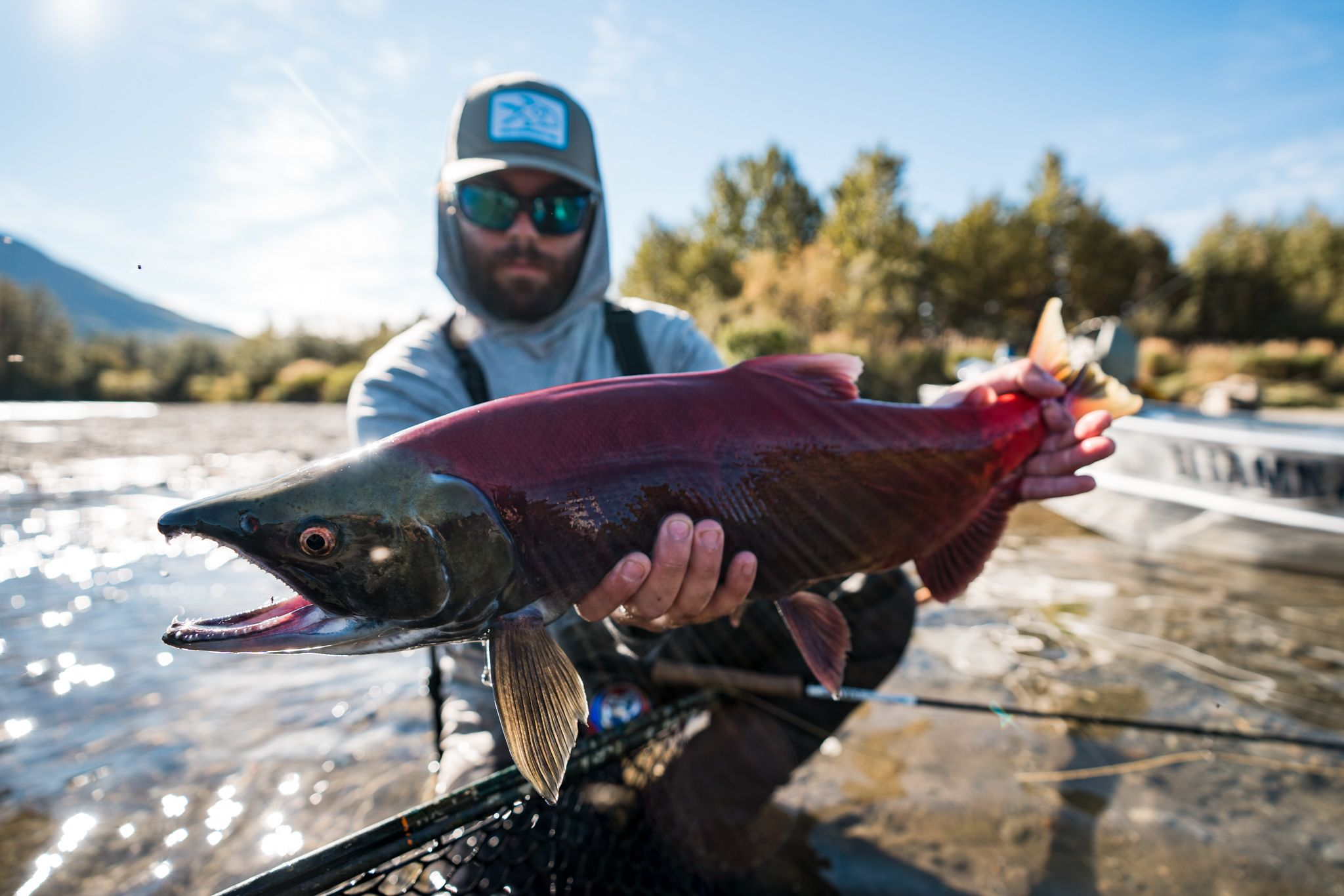 sockeye salmon in alskan rivers